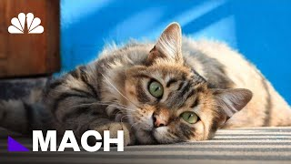 Your Cat Does Hear When You Call. It's Just Ignoring You, Study Says | Mach | NBC News