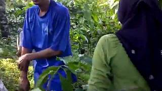 Download Video main di kebun MP3 3GP MP4