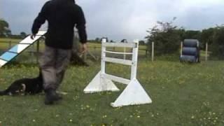 K9 Xena Competition Agility Dog