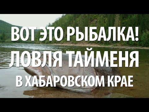 познакомлюсь гермафродиткой хабаровском крае