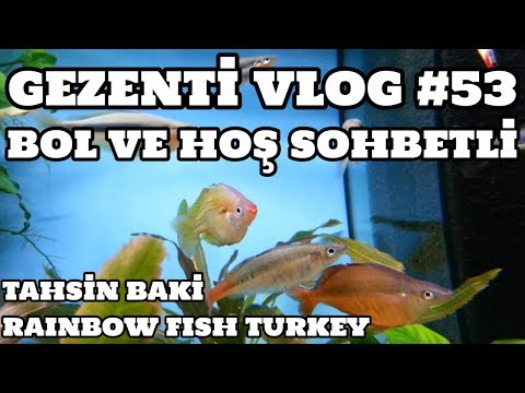 Gezenti Vlog #53 (Rainbow Fish Turkey) [Tahsin Baki]