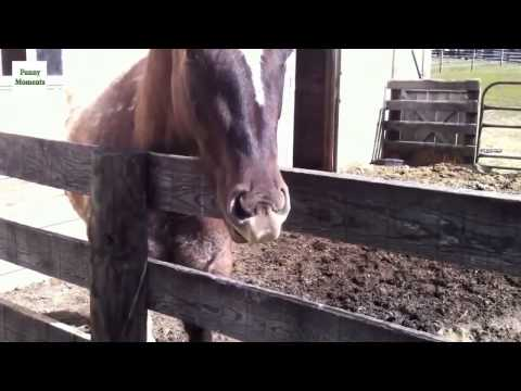 Funny Horse Compilation 2014 NEW HD | Funny Horse