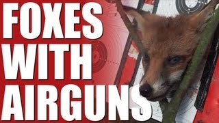 Fieldsports Britain - Foxes with airguns (episode 197)