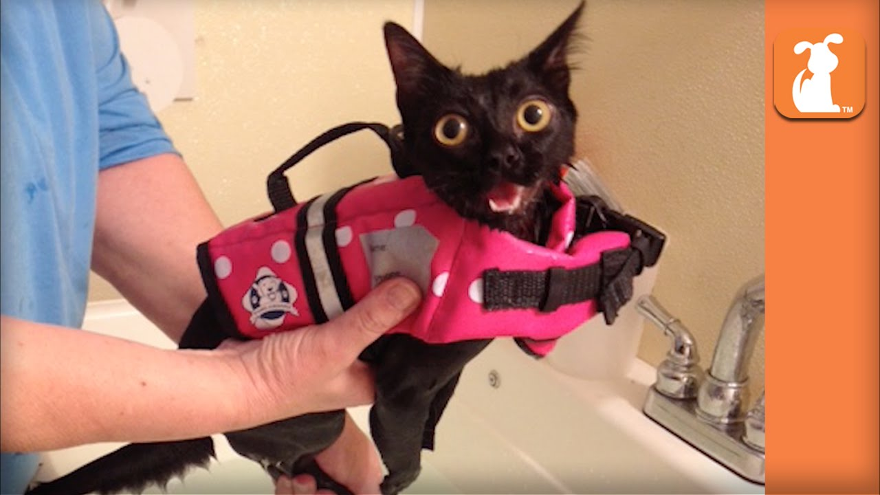 Paralyzed Kitten Given Second Chance With Wheelchair Gets Adopted