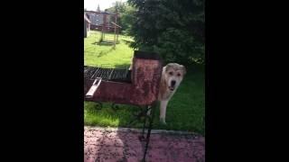 Шок! собака в игре чуть не съела человека