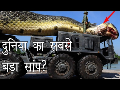 Thumbnail: दुनिया का सबसे बड़ा साँप | Largest Snake in the World | Hoax or Real? | Hoax Hunting Episode 2