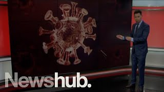 Genome sequencing and how it's being used to fight COVID-19 | Newshub