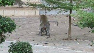 Секс и акробатика в Храме Тигриной Пещеры