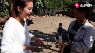 【湘妹小北】農村辦養殖場,養鴨大媽說出年收入,你會心動?