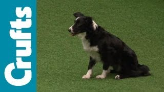 Agility Contest - Small, Medium and Large Breeds Finals | Crufts 2012 thumbnail