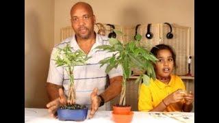 Another Money Tree Making It Rain $$$$$$