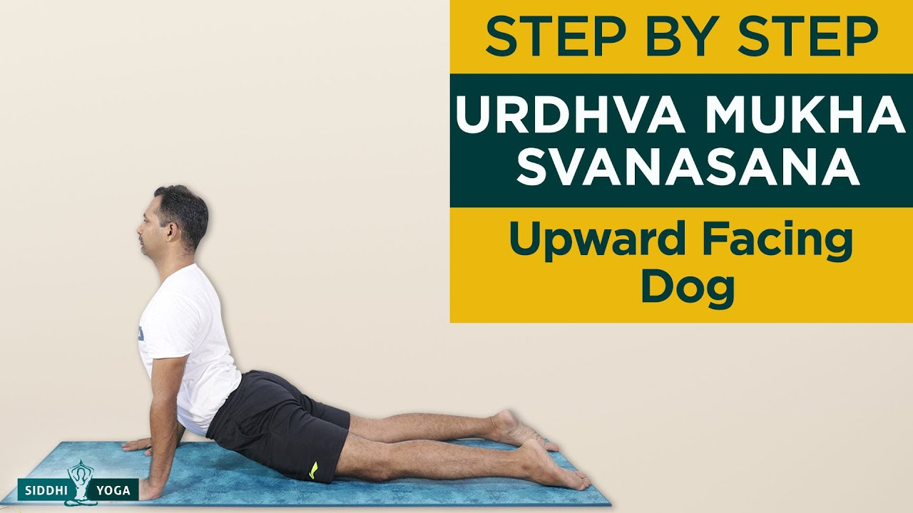 Urdhva Mukha Svanasana (Upward Facing Dog Pose) Benefits by Yogi Sandeep – Siddhi Yoga