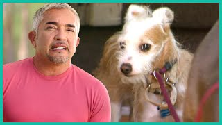 How Household Anxiety Affects Your Dog | Cesar 911
