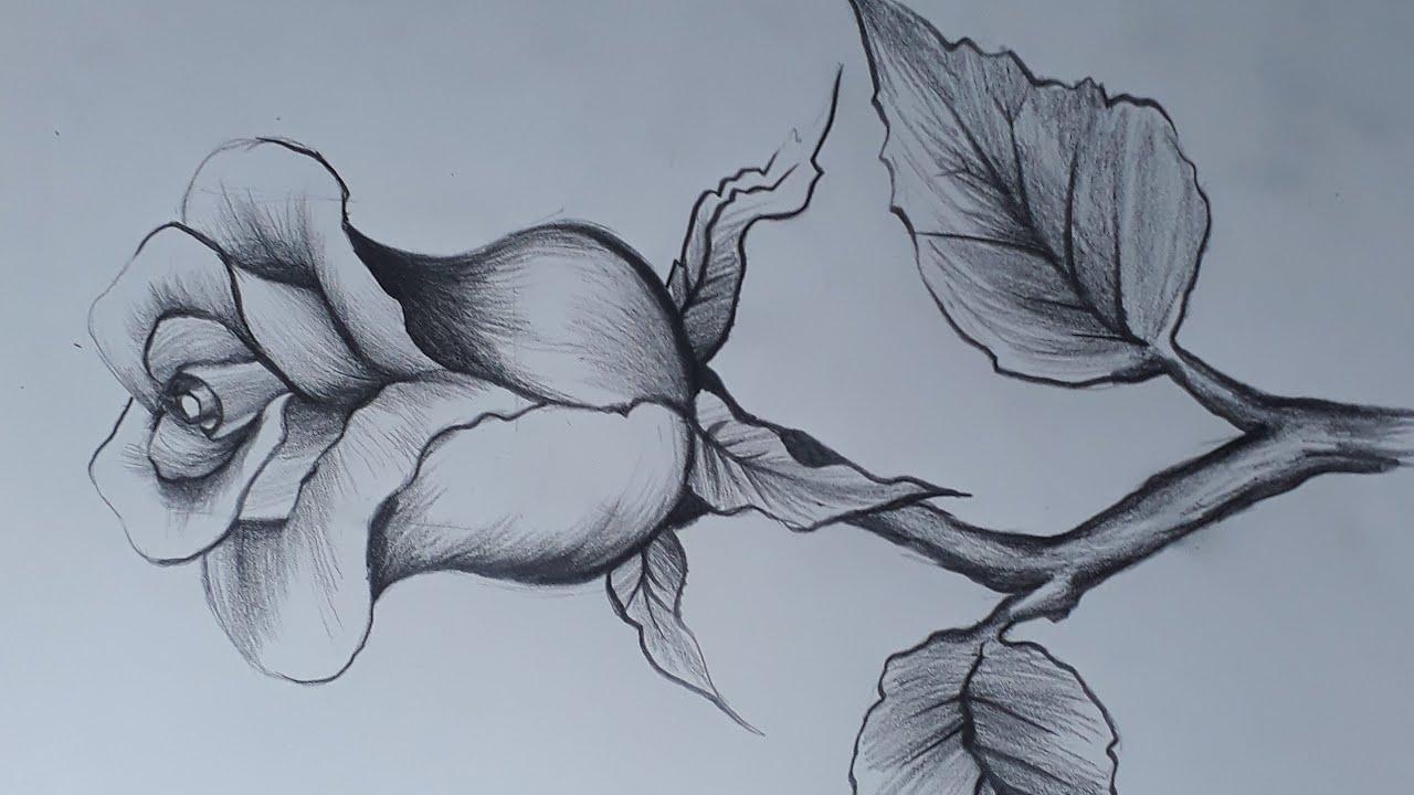 Como Dibujar Una Rosa Con Lapiz Dibujos Bonitos Youtube