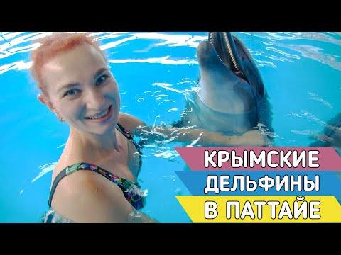 Русский дельфинарий в Таиланде впечатляет ВСЕХ!!!