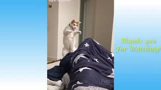Amazing Cute Pets And Funny Animals 2020 | Funny Videos