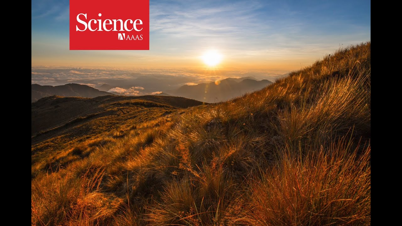 Feature: How the Amazon became a crucible of life | Science
