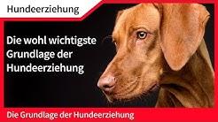 Hundeerziehung ► Die [wohl] wichtigste Grundlage der Hundeerziehung