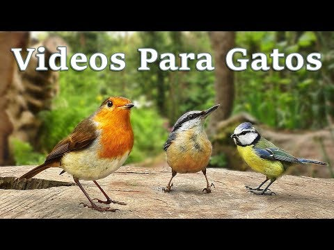 Videos for Cats to Watch : Little Birds and Squirrels - 7 HOURS