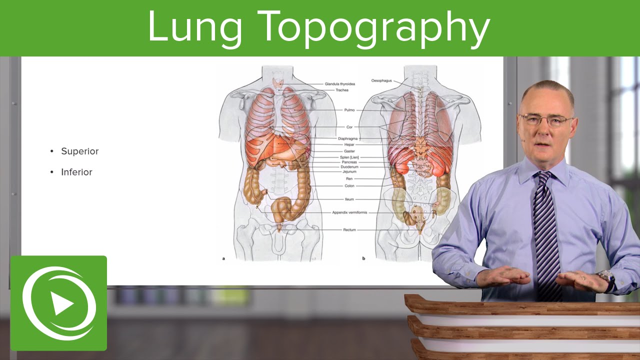 Lung Topography – Anatomy | Lecturio