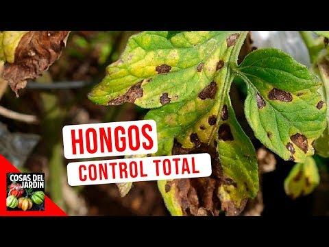 GUIA COMPLETA HONGOS - CONOCE Y CONTROLA LOS HONGOS DE TUS PLANTAS | SCUDO - OSPOVI 55