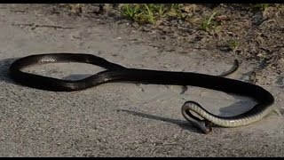 Snake Suicide | Amazing Video | Don