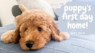 Mini Goldendoodle Puppy's First Day Home // Puppy Vlog 《Turn on Captions!》
