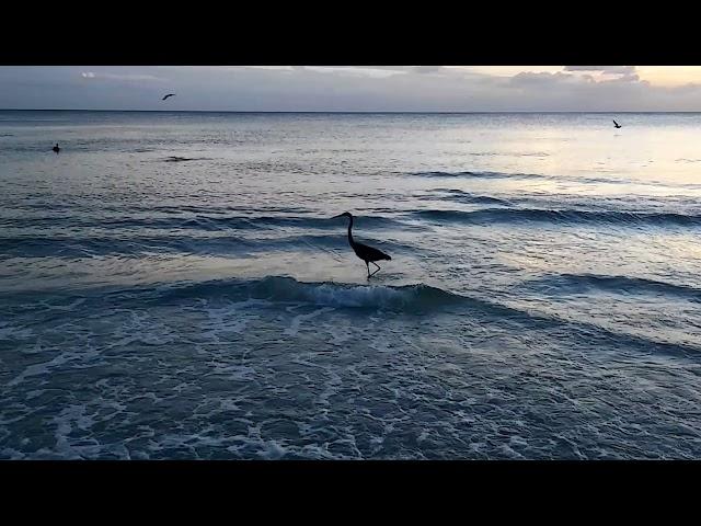 Bradenton Beach Florida fish and birds nooshe jan hour(12)