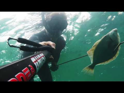 Spearfishing In Cornwall (Lobsters, Mullet & Plaice)