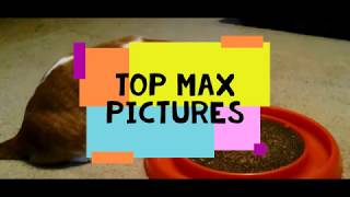 Gambar cover Top Max Pictures