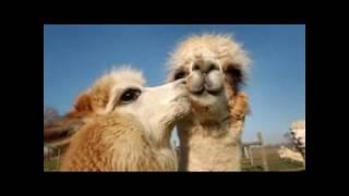 животные и их любовь к друг к другу