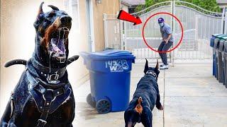 DANGEROUS DOG ATTACKS INTRUDER