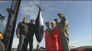 La semaine verte | Thon rouge : vers une pêche durable?