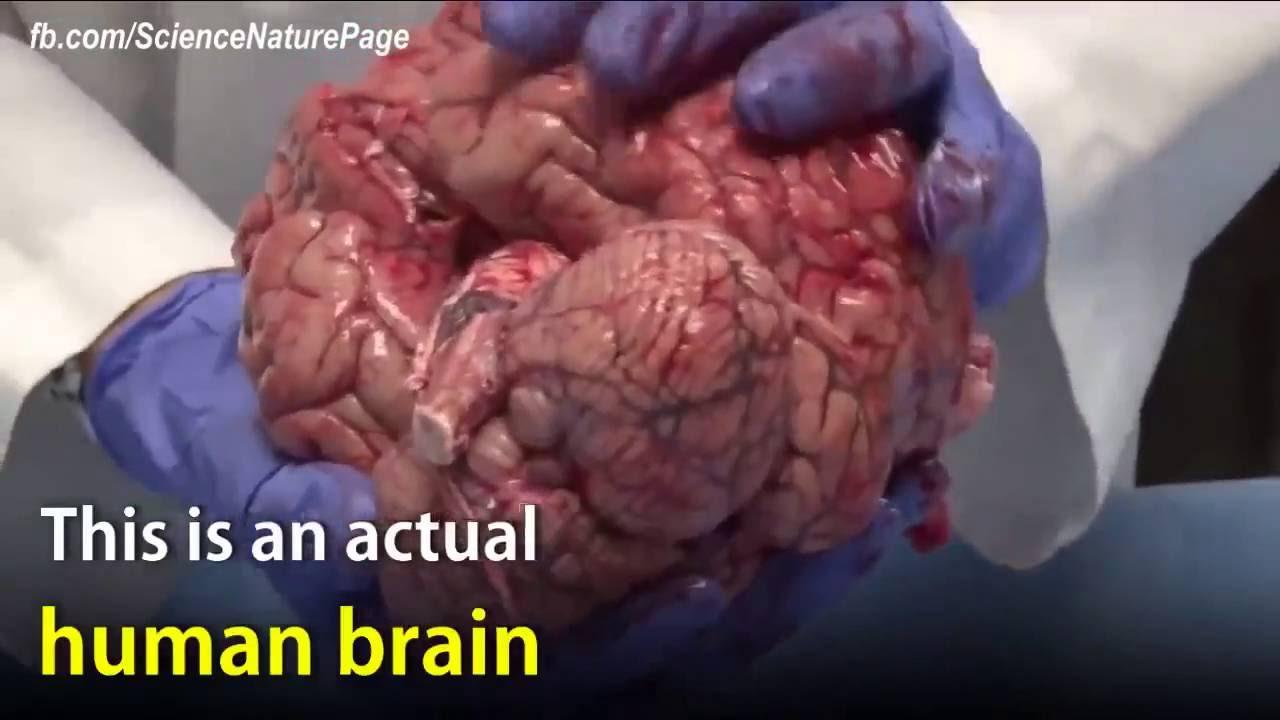 Human brain psychology class youtube human brain psychology class ccuart Gallery