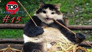 ХА ХА ПРИКОЛЫ 2019 ТОП СМЕШНЫХ ВИДЕО С КОТАМИ Смешные животные Смешные кошки TOP FUNNY PETS 15