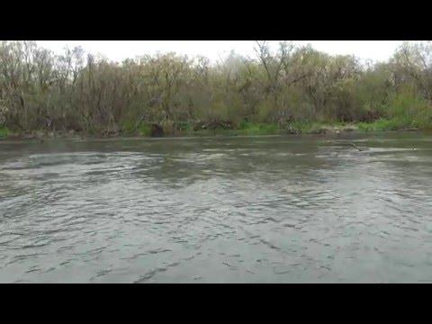 Рыбалка на Камчатке. Ловля и вываживание крупной чавычи в хорошем качестве. Смотрите видео!