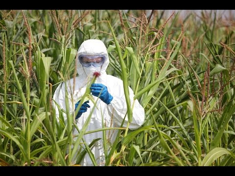 How Monsanto Lied and Manipulated its Way to Power