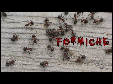 Formiche - Creepypasta [ITA] ft. Orobic bg