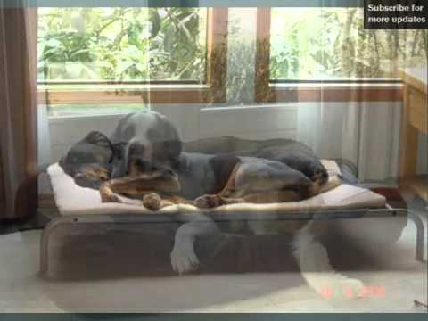set of useful picture ideas of dog beds for large dogs dog beds for large dogs