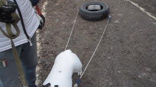 Собаки тренировка с покрышкой. Породы дорогие, Херсон