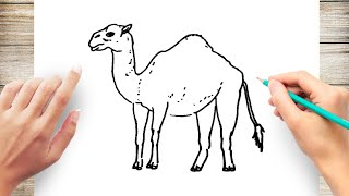 How to Draw Camel Step by Step for Kids