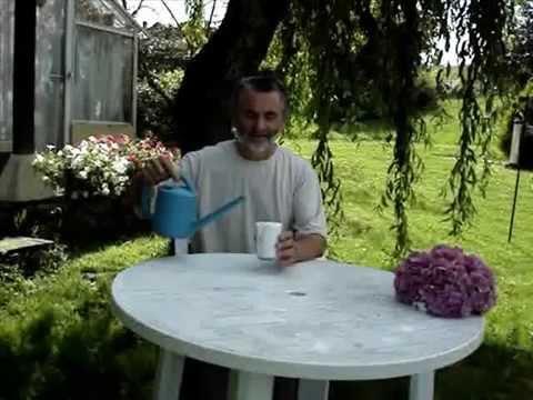 El cultivo de la judia verde y el boliche doovi - Como hacer judias verdes ...