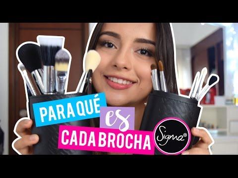 BROCHAS SIGMA: FUNCIÓN DE CADA BROCHA | Carolina Fg