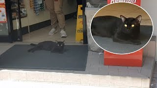 Cat Basks In Shop's Cool Air Con