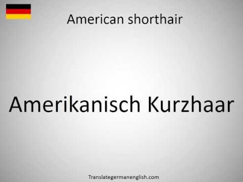 How to say American shorthair in German?