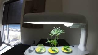 AeroGarden Sprout timelapse