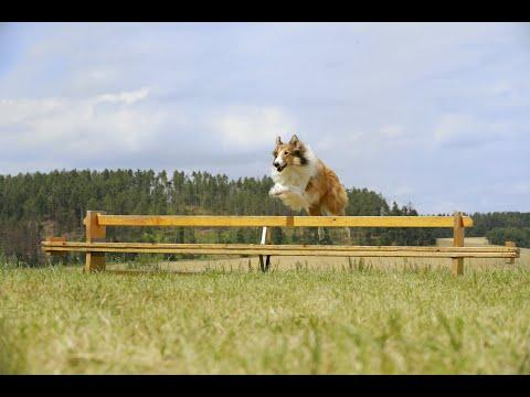 Lassie Torna A Casa | Trailer ITA HD