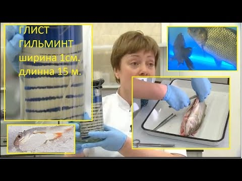 Рыба с глистами