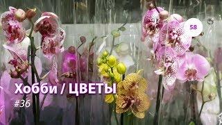 58#36 / Хобби-Цветы / 19.05.2018 - ИКЕЯ ХИМКИ. ОРХИДЕИ