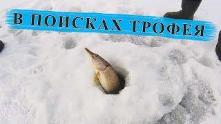 Оставили жерлицы на ночь Зимняя Рыбалка с Ночевкой и Комфортом